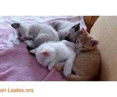 Gatitos ya adoptados - Imagen 1