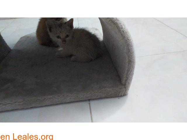 Gatitos ya adoptados - 2