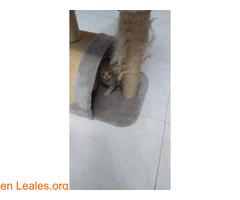 Gatitos ya adoptados - Imagen 3