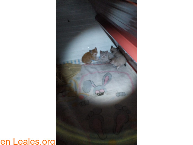Gatitos ya adoptados - 4