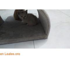 Gatitas ya adoptadas - Imagen 2