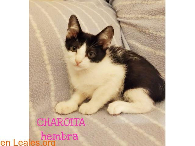 CHAROITA - 2