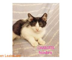 CHAROITA - Imagen 3