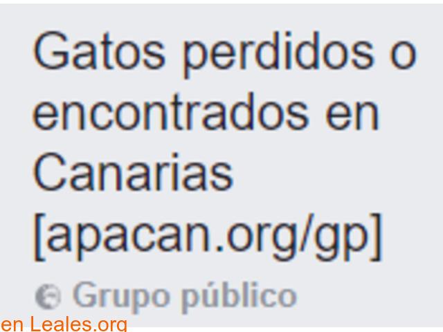 Gatos Perdidos o Encontrados en Canarias - 1
