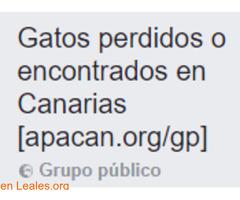 Gatos Perdidos o Encontrados en Canarias - Imagen 1