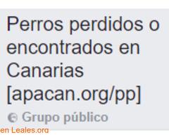 Perros perdidos o encontrados Canarias - Imagen 1