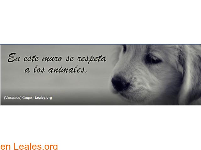 Perros perdidos o encontrados Canarias - 2