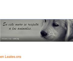 Perros perdidos o encontrados Canarias - Imagen 2