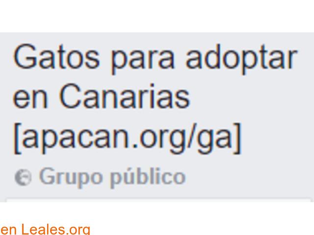 Gatos para adoptar en Canarias - 1