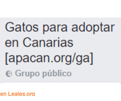 Gatos para adoptar en Canarias - Imagen 1