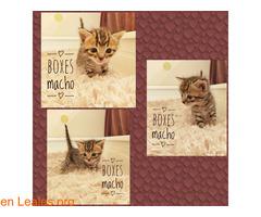 BOXES LISTO PARA SE DE TU FAMILIA - Imagen 1