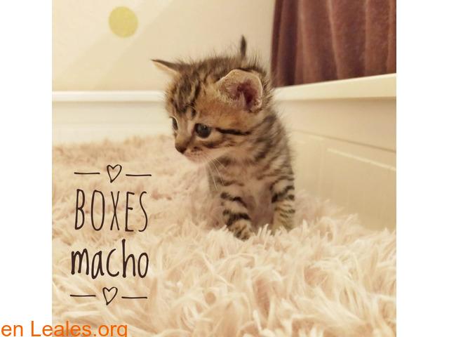 BOXES LISTO PARA SE DE TU FAMILIA - 3