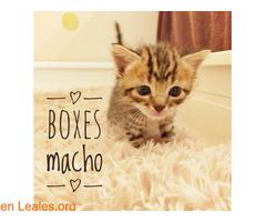 BOXES LISTO PARA SE DE TU FAMILIA - Imagen 4