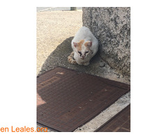 Gatito en muy mal estado - Imagen 1