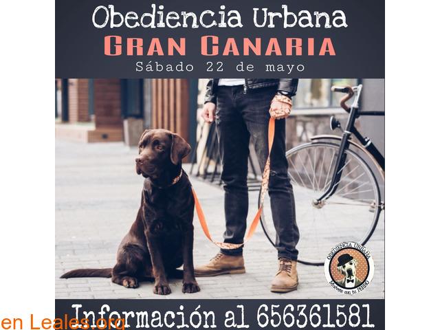 Curso de Obediencia Urbana - 1