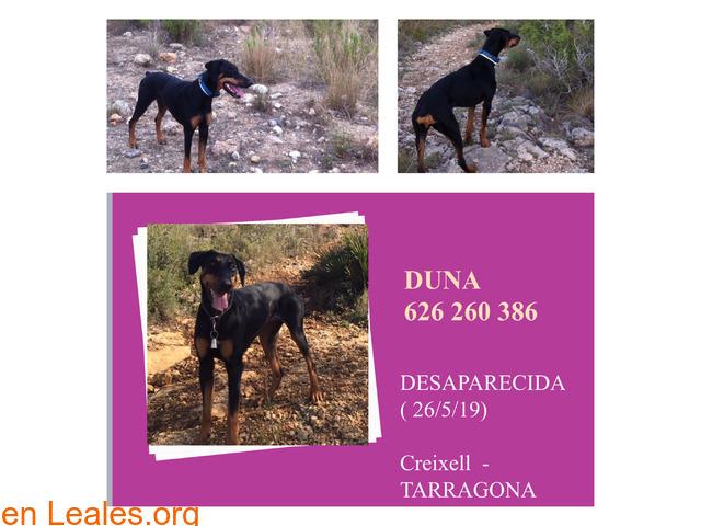 Duna - 1