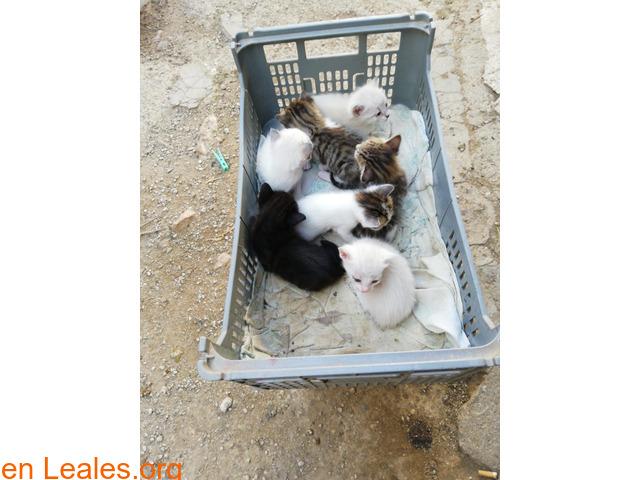 Se busca adopción para estos pequeñines  - 1