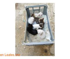 Se busca adopción para estos pequeñines  - Imagen 1