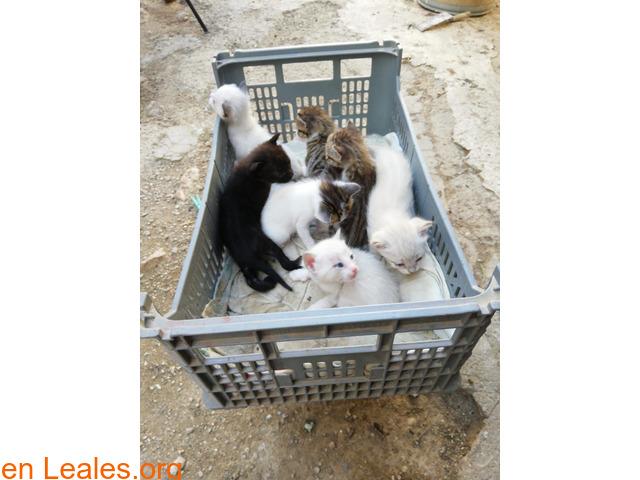 Se busca adopción para estos pequeñines  - 2