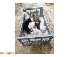 Se busca adopción para estos pequeñines  - Imagen 2