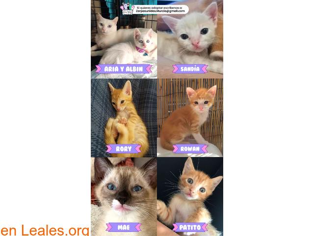 Muchos gatitos/as para enamorarte!!!!