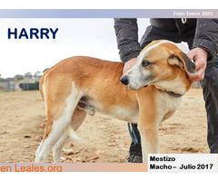 HARRY - Imagen 1