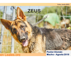 ZEUS - Imagen 1
