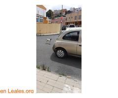 Vagando por hoya andrea - Imagen 2