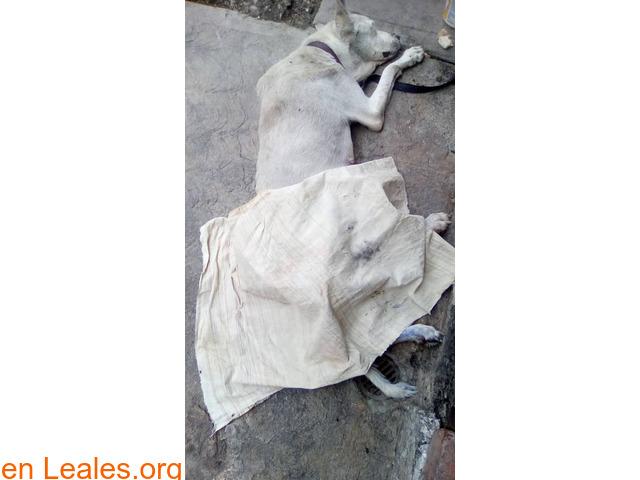 Ayudar a Perla. VENEZUELA - 2