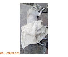 Ayudar a Perla. VENEZUELA - Imagen 2