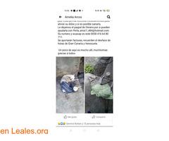 Ayudar a Perla. VENEZUELA - Imagen 3