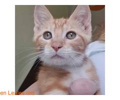 Garfield  - Imagen 1