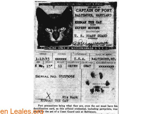 La importancia de los gatos en los barco