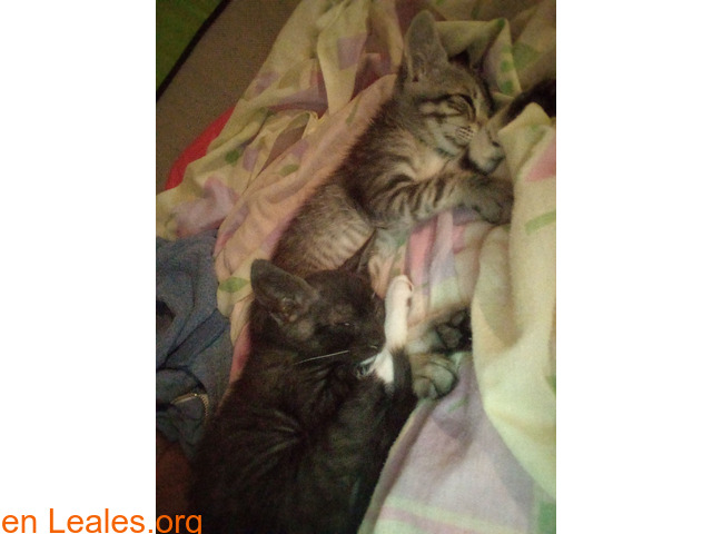 Doy en adopción a dos hermosos bebés