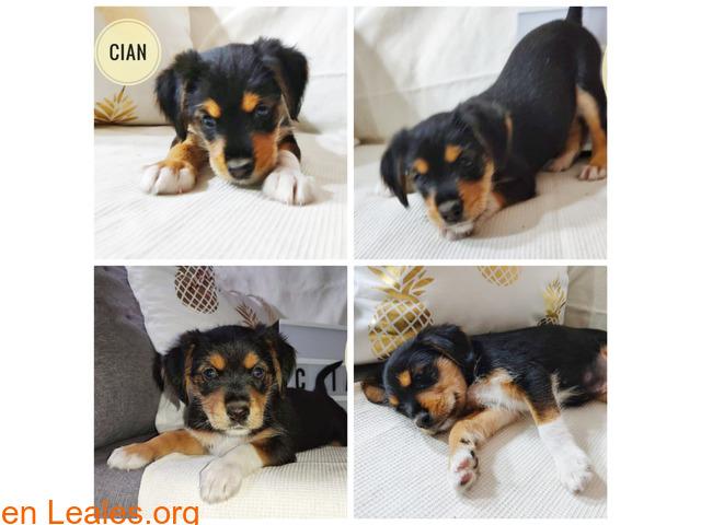 Cian - 1