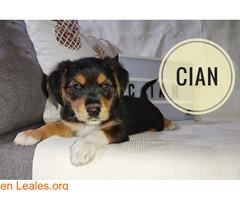 Cian - Imagen 3