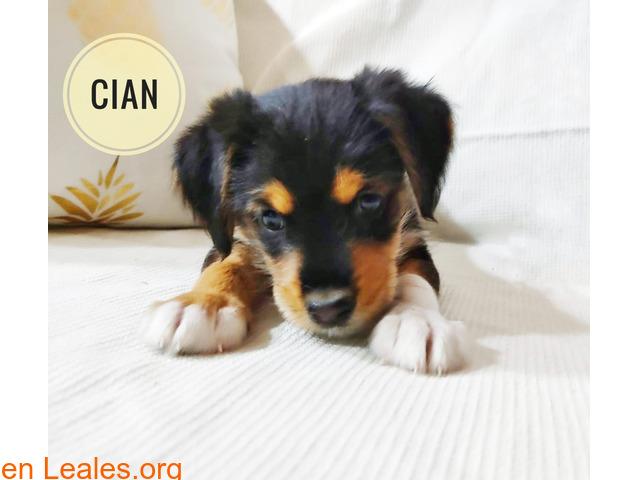 Cian - 4