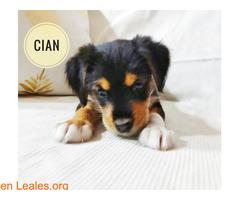 Cian - Imagen 4