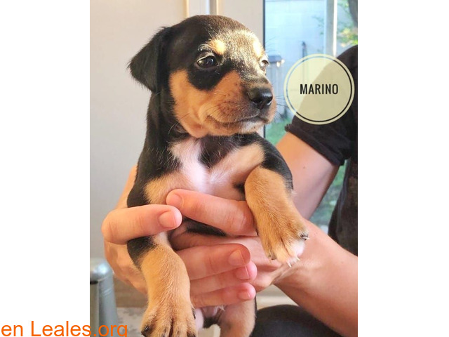 Marino - 3