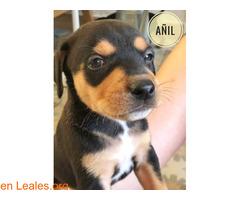 Añil - Imagen 2