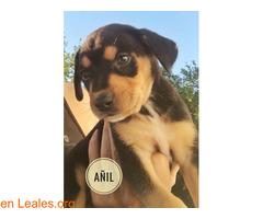 Añil - Imagen 3