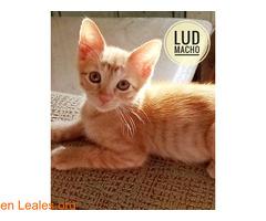 Lud - Imagen 2