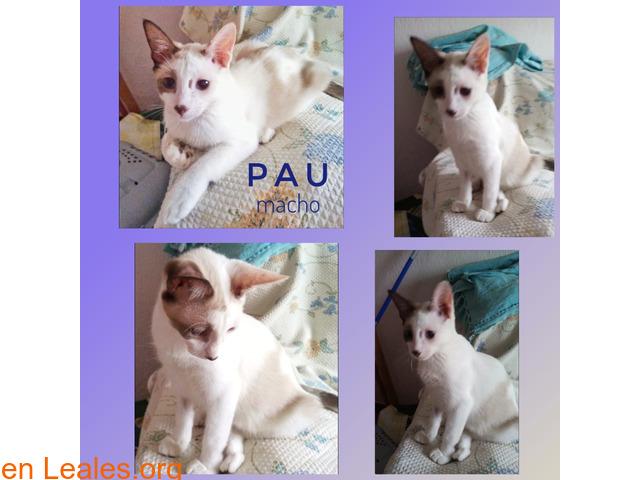 Pau - 1