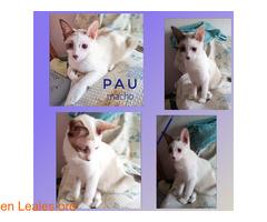 Pau - Imagen 1