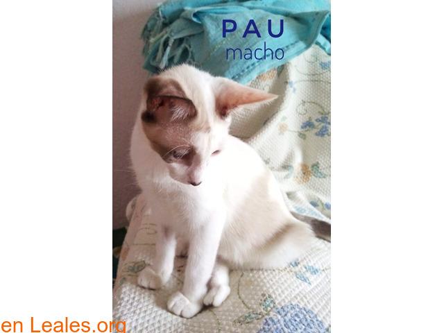 Pau - 2