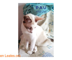 Pau - Imagen 2