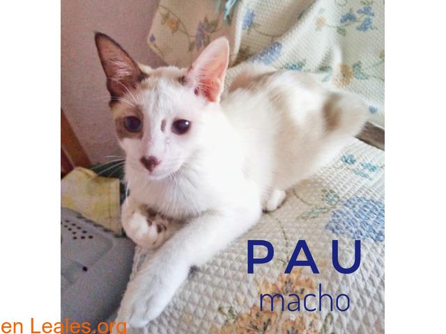Pau - 3