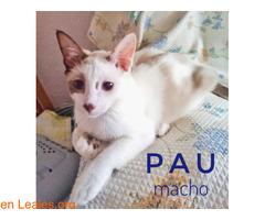 Pau - Imagen 3