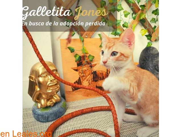 GALLETITA Y BIZCOCHITO - 7