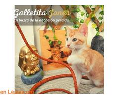GALLETITA Y BIZCOCHITO - Imagen 7